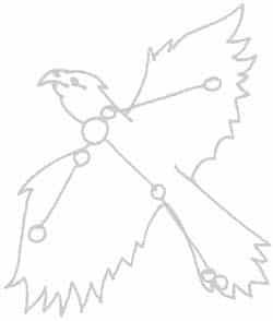vogel_horus_a